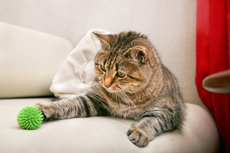 The best cat chew toys you can buy right now