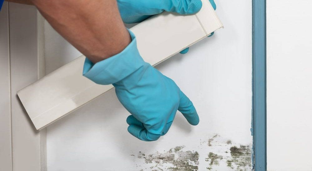 Mold testing can prevent sickness